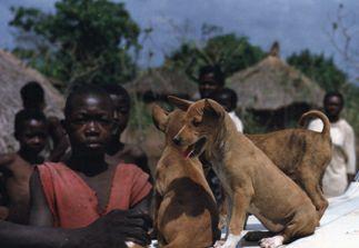 https://www.basenji.org/african/images/GangAfXw.JPG