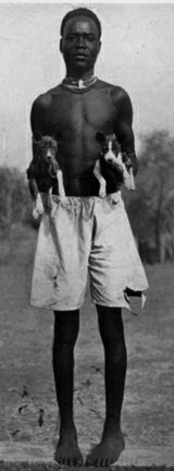 Man in Africa with basenji pups